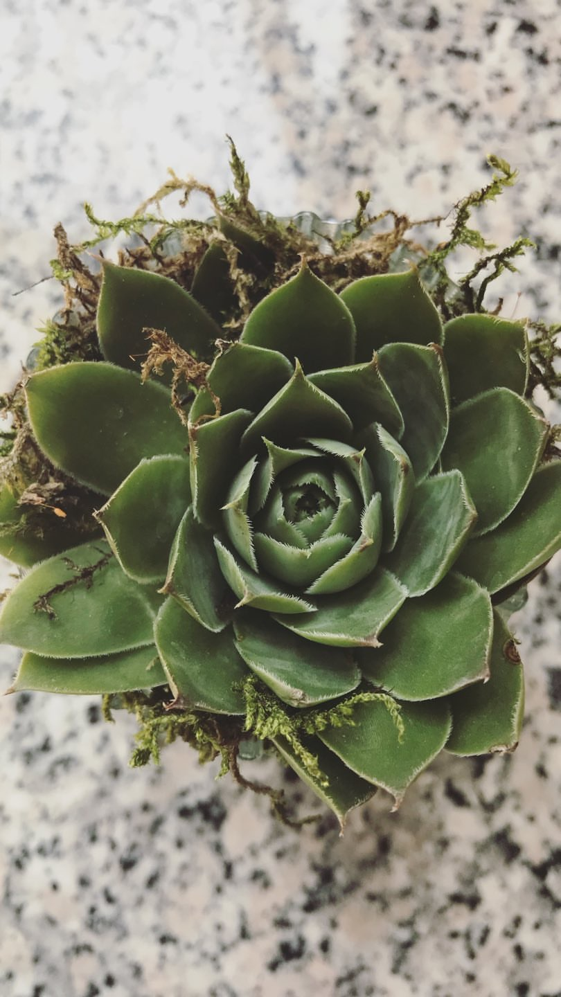 Joyful Week at Proof & Parchment no. 21, Emile: Succulent